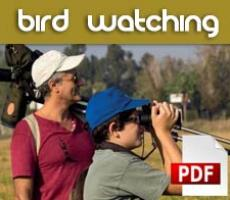 Descarga el folleto bird watching Comunidad Valenciana