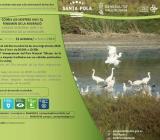Día Mundial de las Aves Migratorias 2018 en Santa Pola
