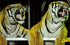 Los tigres de Siberia