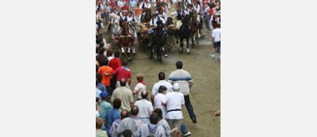 Img 1: Eintrieb der Stiere und Pferde