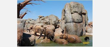 Imatges d'animals en el Bioparc València