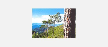 19_es_imagen2-13desertpalmes2.jpg