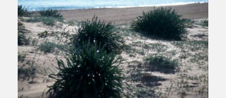 Img 1: La Gola Beach