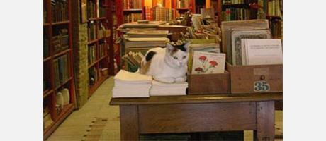 libreria-valencia-k.jpg