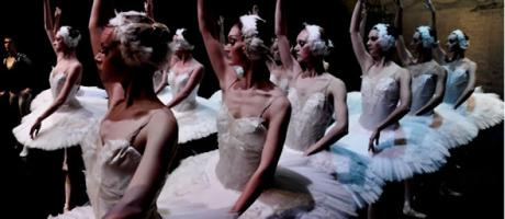 Cisnes del ballet El Lago de los Cisnes