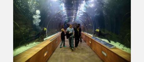 Túnel de templados