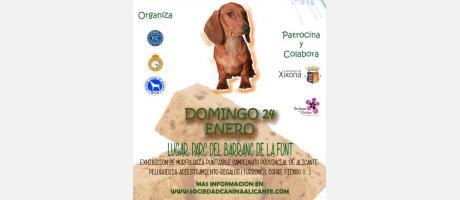 Concurso canino de Xixona