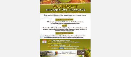 Sunset amongst the vineyards 16 EPNDB