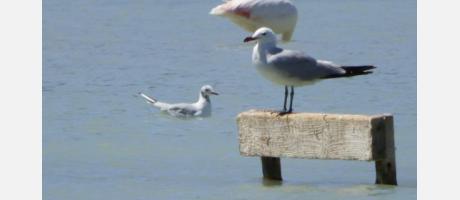 Calp_Turismo_ornitológico_Img4