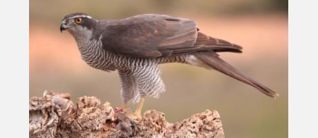 Gandia_Birdwatching_Spain_Img2