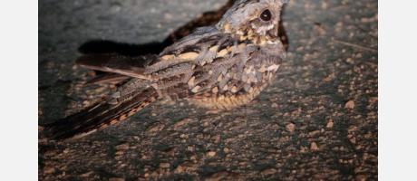 Gandia_Birdwatching_Spain_Img5