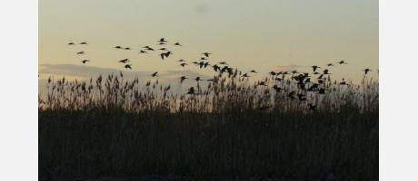 Valencia Actio Birding