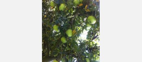Árbol con manzanas