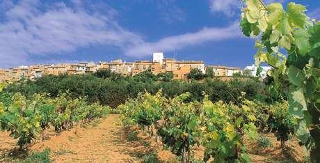 Viñedos de Requena en la Comunitat Valenciana