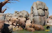 Bioparc València, espai per als animals