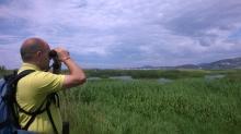 Birding en la Marjal dels Moros, Sagunt