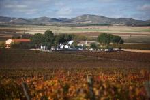 Enrique Mendoza Winery: wine as an experience