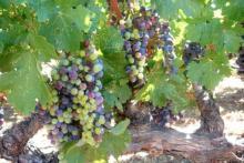 Laissez-vous emporter dans les vignobles à Mas de Rander