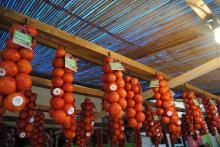 Fira Tomata de Penjar Alcalà de Xivert