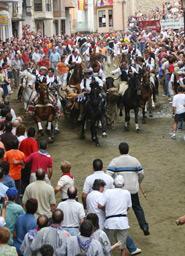 Eintrieb der Stiere und Pferde