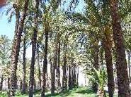 Parque El Parmeral