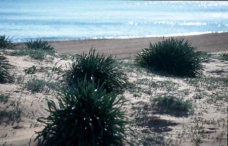 La Gola Beach
