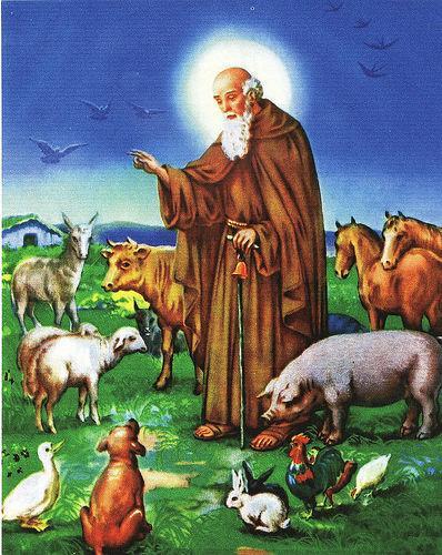Festividad de San Antonio Abad en los Ibarsos