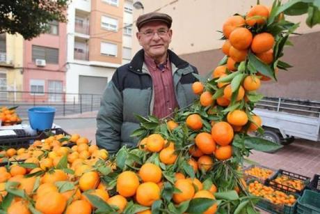 Naranjas de castell n del huerto a la mesa - Naranjas del arbol a la mesa ...