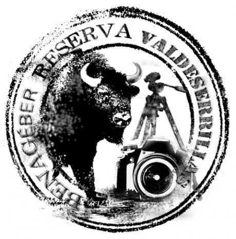 BISONTES EN BENAGÉBER-  RESERVA DE VALDESERRILLAS-