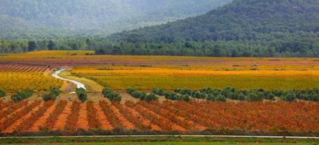 Terres dels Alforins: Une proposition d'écotourisme à Valencia