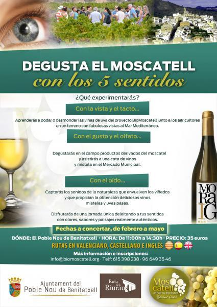 Taste Moscatel wine with your 5 Senses 2020