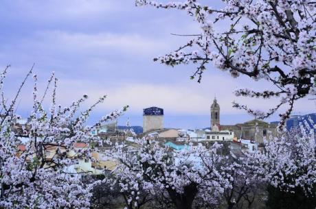 La primavera estalla en Feslalí, 'Alcalalí en flor'