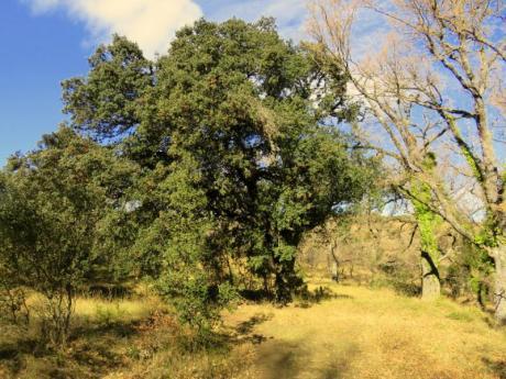 Microreserva de flora Paraje Natural Municipal El Rivet