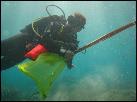 Limpieza submarina y litoral de Benissa