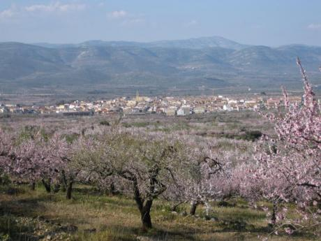 Descubriendo Albocàsser: tiempo de almendros en flor