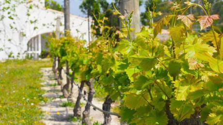 Weintourismus in der Provinz Alicante