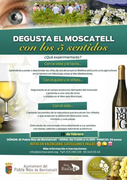 Taste Moscatel wine with your 5 senses