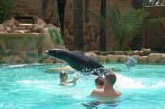 Swim with the sea lions at Rio Safari Elche